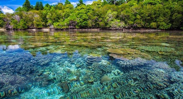 Denis Island, ostrov, který ještě stále můžeme nazvat rájem
