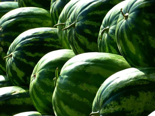 vodní melouny