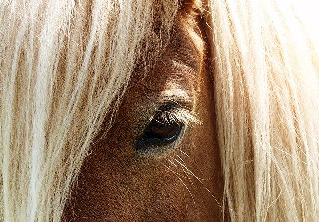 Detail koňské hlavy-oko, hříva